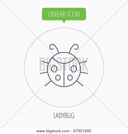 Ladybug icon. Ladybird insect sign.