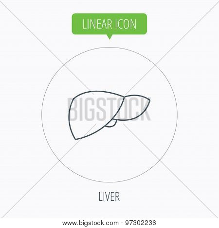 Liver icon. Transplantation organ sign.