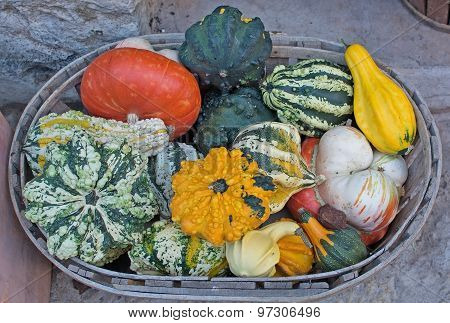 Colorful Squashes And Pumpkins