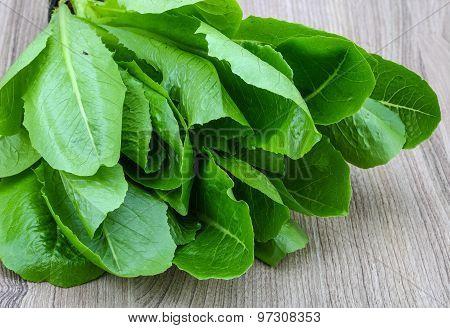 Romano Salad Leaves