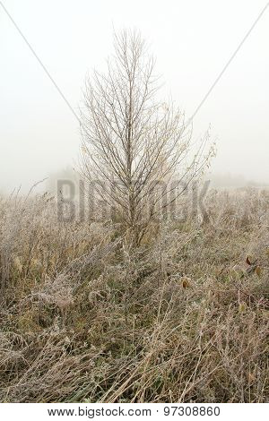 Early Winter Frost