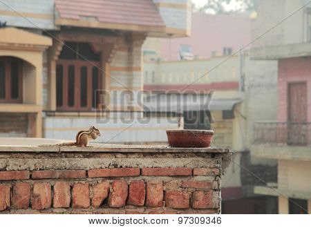 squirrel is eating someting on the roof of building
