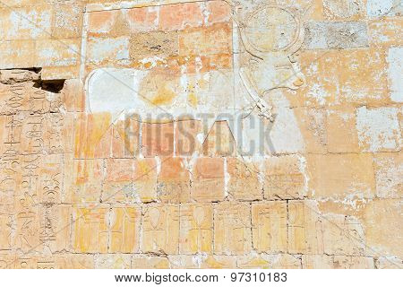Wall Paintings In Temple Of Hatshepsut In Egypt