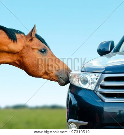 Concept: Two Stallions - Animal And Vehicle