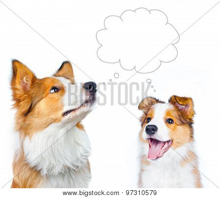 Border Collie Adult And Puppy Dreaming With Thoghts Bubble