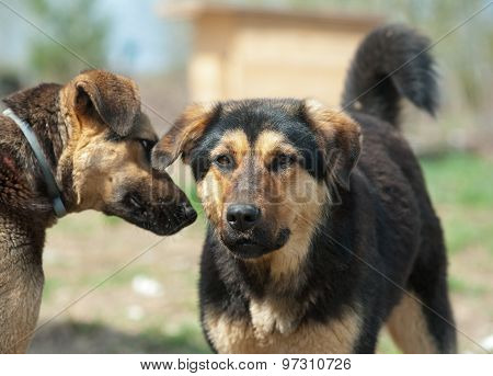 Wild Dogs In Shelter