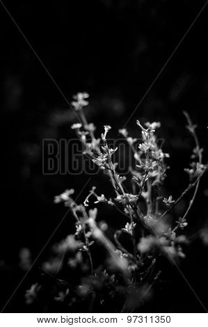 Flowers In Darkness