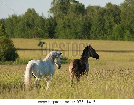 Horses On Freedom