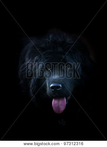 Black Dog Over A Black Background
