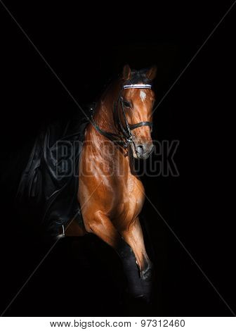 Saddle Horse In Dark