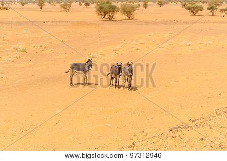 Desert Landscape In Sudan