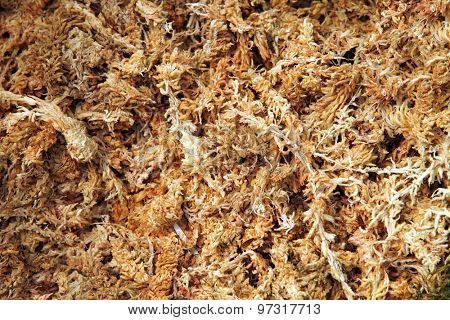Dried sphagnum moss