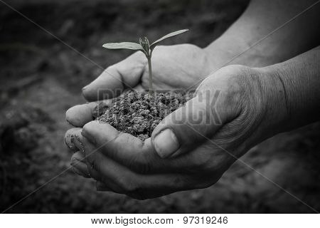 Young Sprout In Hands