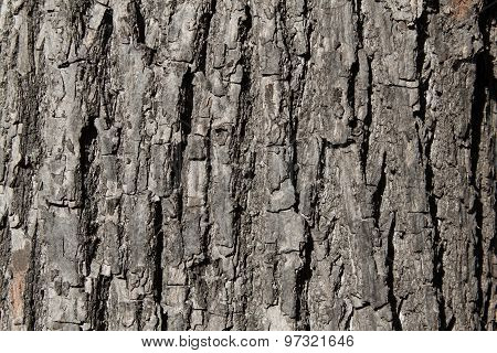 Wood Texture. Close-up. Cracks On A Tree Trunk.