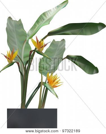 illustration with blossoming green large plant isolated on white background