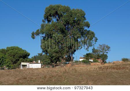 vegetation and Nature