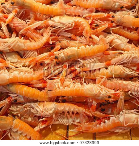 Norwegian Lobster