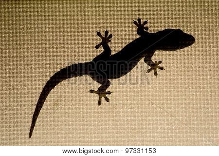 Lizard , Gecko Silhouette On A Window With Mesh