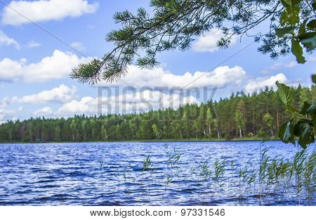 forest lake surrounded by pine trees