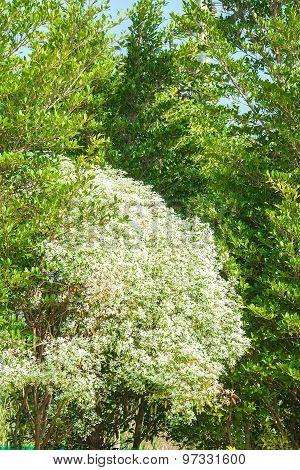 Pattern Bush White