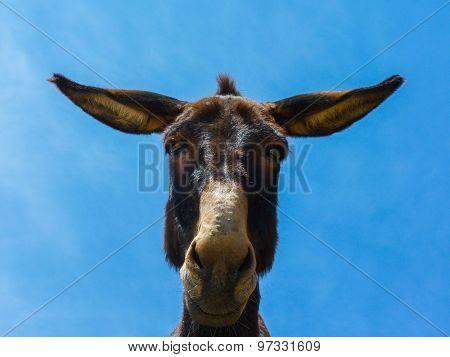 Cute funny mule