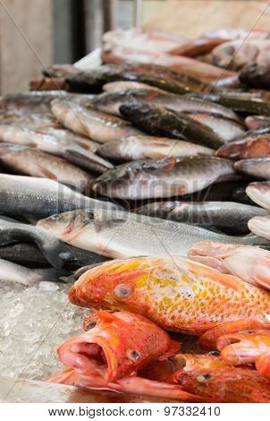 Fresh Fish In A Fish Market