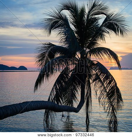 Coconut Palm Tree Silhouette At Sunset. Thailand