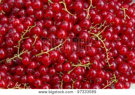 Background From Redcurrants