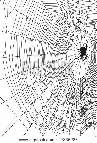 The vector illustration of web and spider on white background