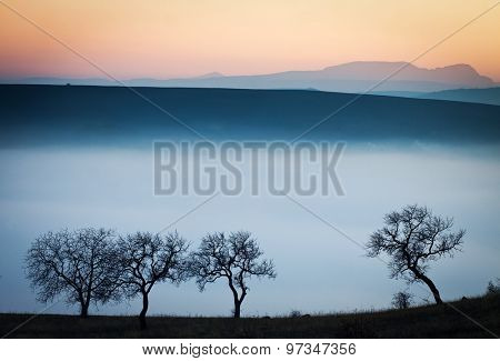 Evening mist on a field with leafless trees at sunset - autumn background