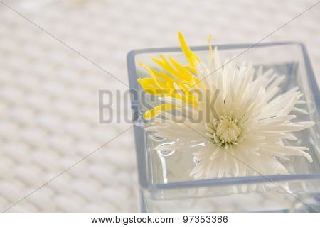 Flowers in watered vase  on  table