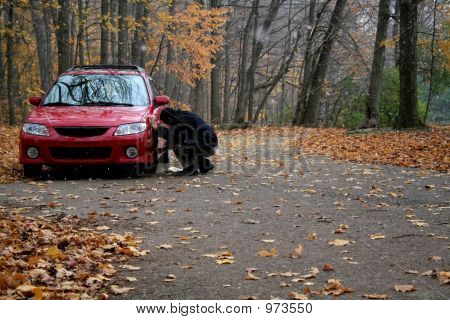 Fixing The Car In Forest