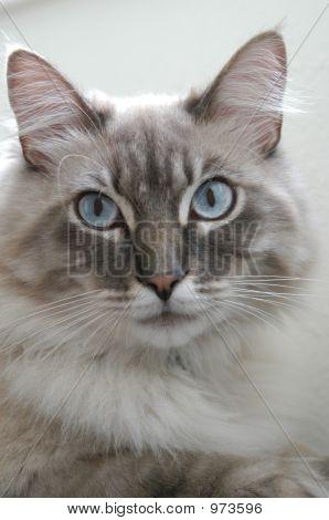 Ali Kitty