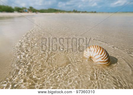 nautilus shell on white beach sand, against sea waves, shallow dof, soft focus