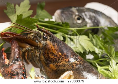 a raw lobster and sea bream