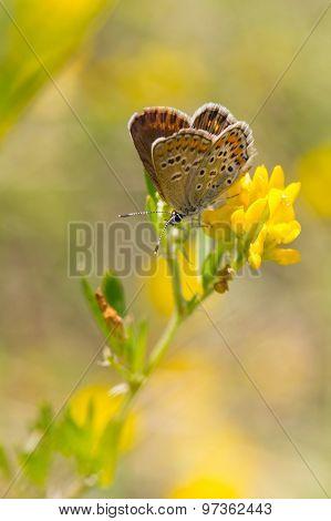 Beautiful Butterfly Sitting On A Flower