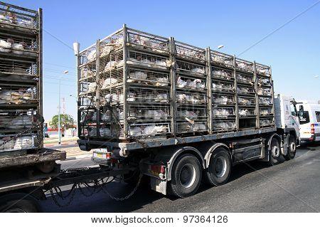 Transportation Turkeys