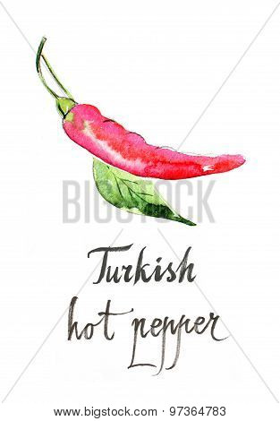 Watercolor Turkish Hot Pepper