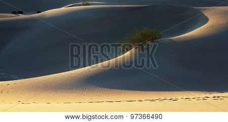 Fine smooth contours of sand dunes at sunrise. California, Death Valley