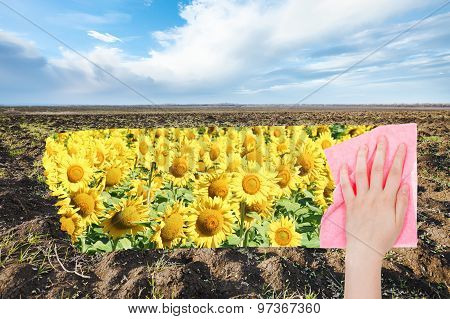 Hand Deletes Spring Plowed Field By Pink Cloth