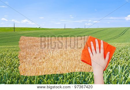 Hand Deletes Green Wheat Field By Orange Cloth