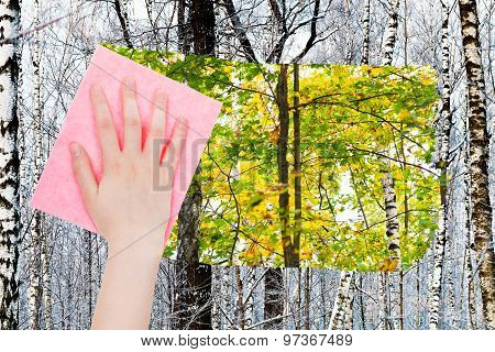 Hand Deletes Bare Trunks In Winter Forest By Cloth