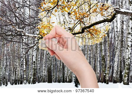 Hand Deletes Winter Forest By Rubber Eraser
