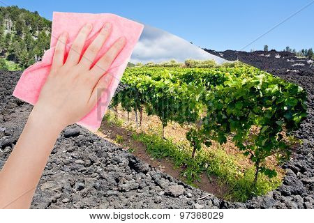 Hand Deletes Lava On Etna Volcano Slope By Pink Cloth