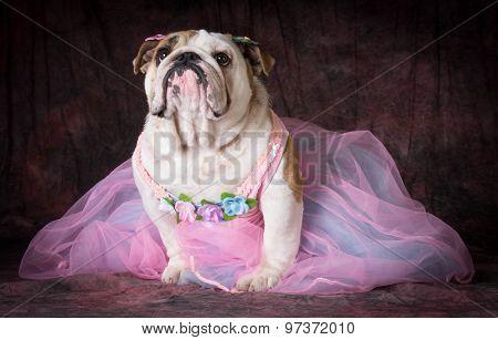 female dog wearing pink dress on purple background