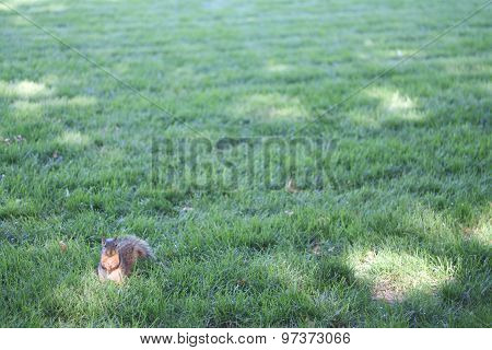 Squirrel sitting on grass