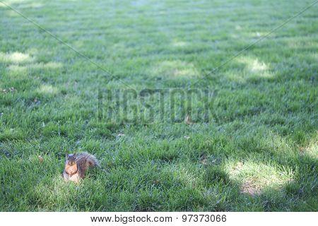 Squirrel sitting on grass