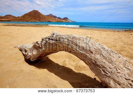 Almeria Playa de los Genoveses beach trunk in Cabo de Gata Spain