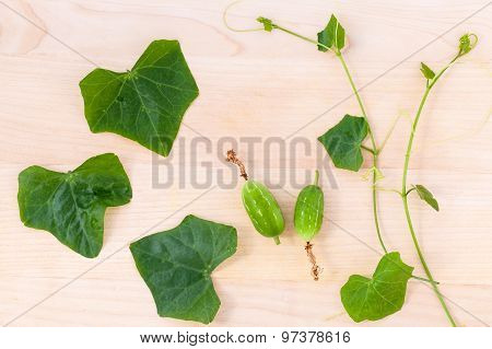 The Ivy Gourd, Also Known As Baby Watermelon, Little Gourd, Gentleman's Toes, The Local Herbal Have