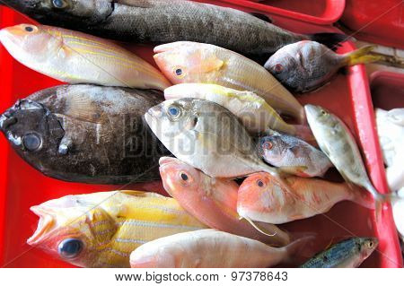 Tropical colorful fish for sale in the market. Philippines.